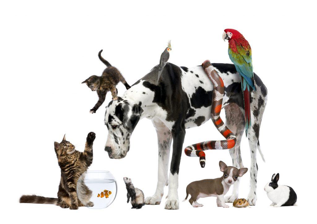قبل إحضار كلب أو قطة جديدة إلى المنزل
